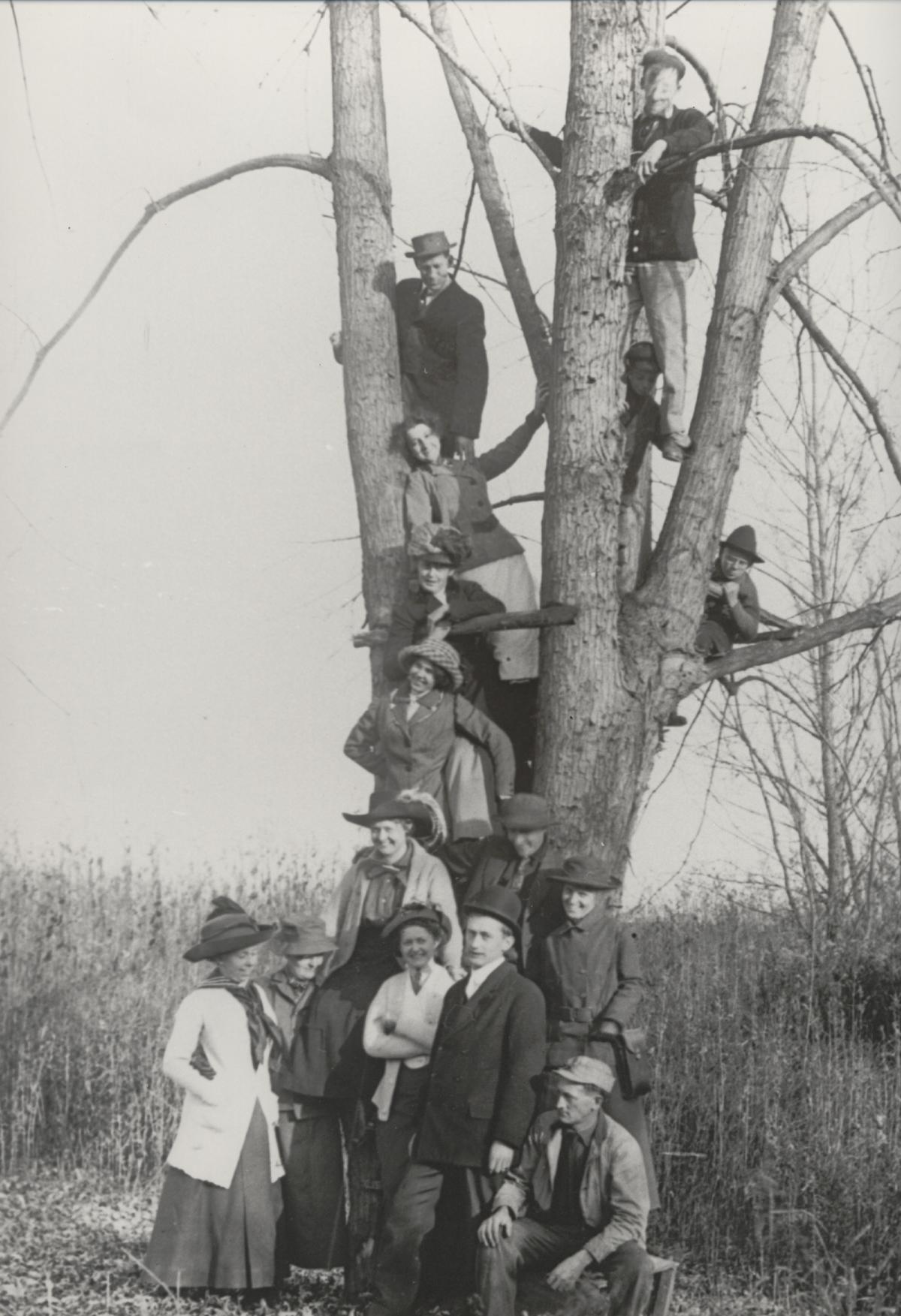 A Genealogy Tree
